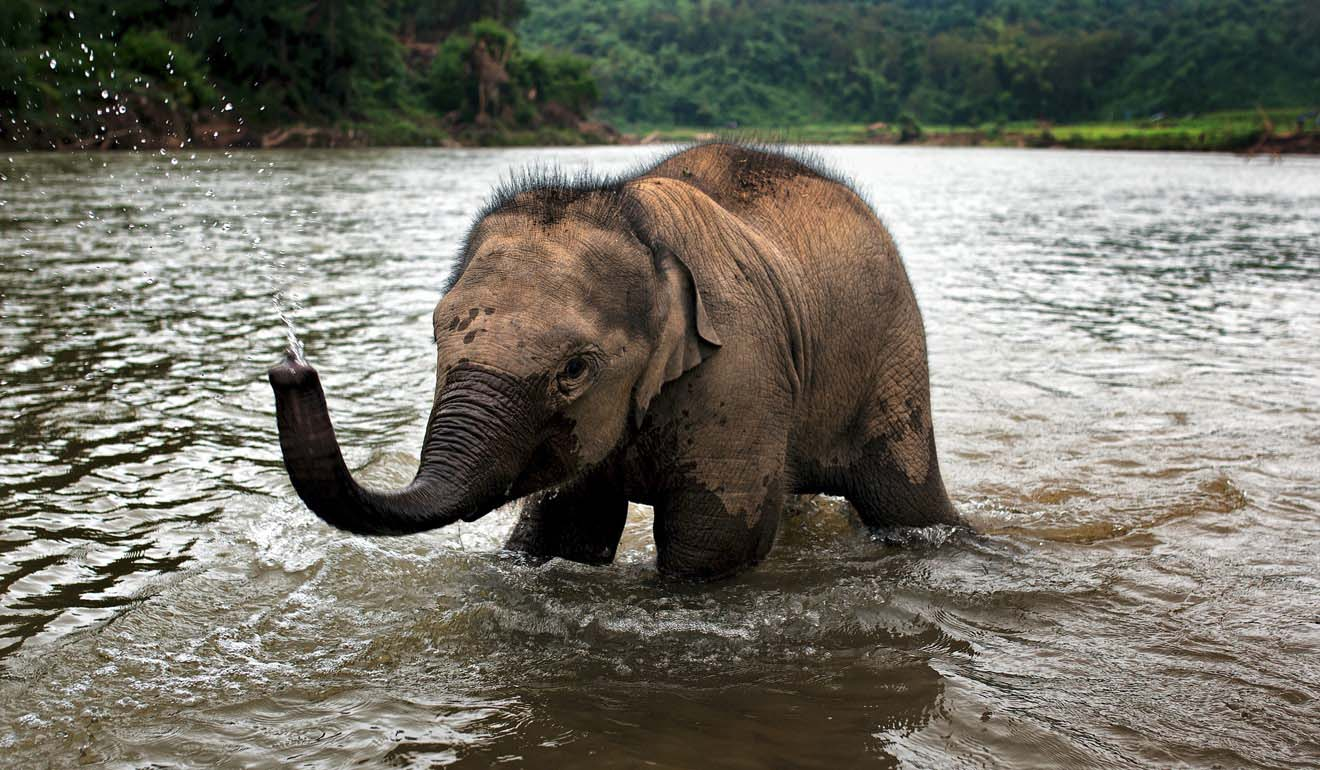 Elephant tourism in Laos: how one ecotourism start-up provides the entertainment without the exploitation